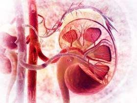 Ist Creatin gefährlich für die Nieren?   Studien Review