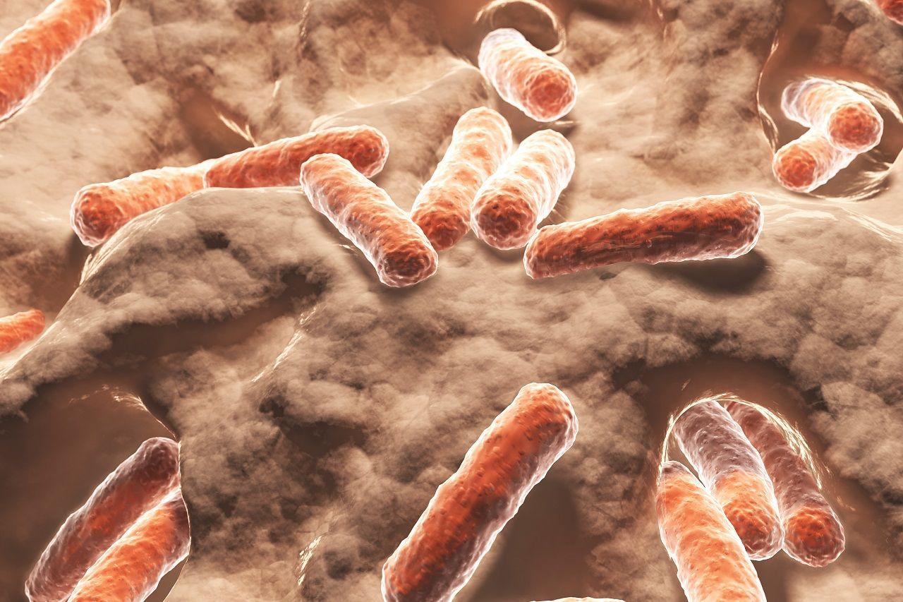 Die Mikrobiota: Welchen Einfluss hat die Darmflora auf unsere Gesundheit? | Zwischen Hype & Wissenschaft