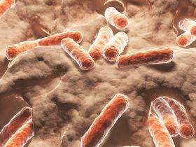 Darmbewohner: Wie die Darmflora unsere Gesundheit beeinflusst   Zwischen Hype & Wissenschaft