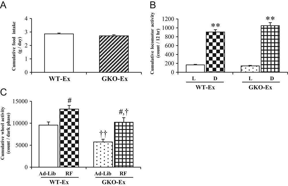 Nahrungsaufnahme, körperliche Aktivität und Aktivität im Laufrad mit zeitlich eingeschränkter Nahrungszufuhr (2 Mal/Tag). Die kumulative Nahrungszufuhr (A) und körperliche Aktivität (B) wurden nach Hell- (L) und Dunkelperiode gruppiert. Vergleich der kumulativen Aktivität auf dem Laufrad während der Dunkelperiode (C) zwischen Ad libitum (Ad lib) Mäusen und jenen, die eine zeitlich eingeschränkten Nahrungsaufnahme befolgten (RF). WT-Ex = Normale, gesunde Mäuse; GKO-Ex = Mäuse, in denen Ghrelin deaktiviert wurde. WT (n = 8); GKO (n = 8); L = Helle Periode; D = Dunkle Periode; Ad-lib = Ad libitum Ernährung; RF = zeitlich eingeschränkte Ernärhung. **P < 0,01 versus Lichtperiode in jedem Genotyp von Mäusen.