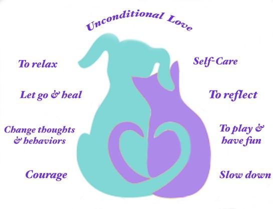 AC Dog Cat Turquoise Purple