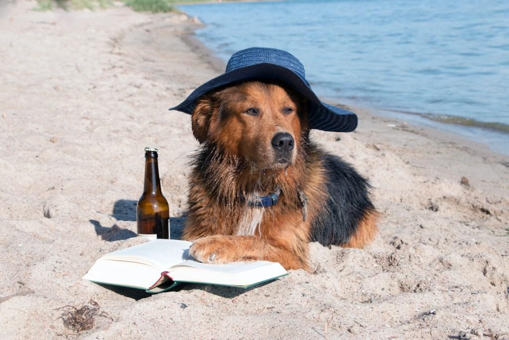 Bellomo-Dog Days of Summer
