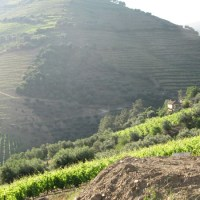 Day 12 Douro Valley Half Marathon