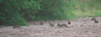 mongood