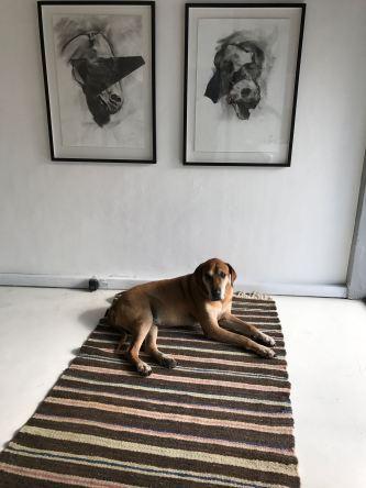 Dog and art.