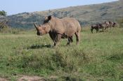 We were this close to a rhino.