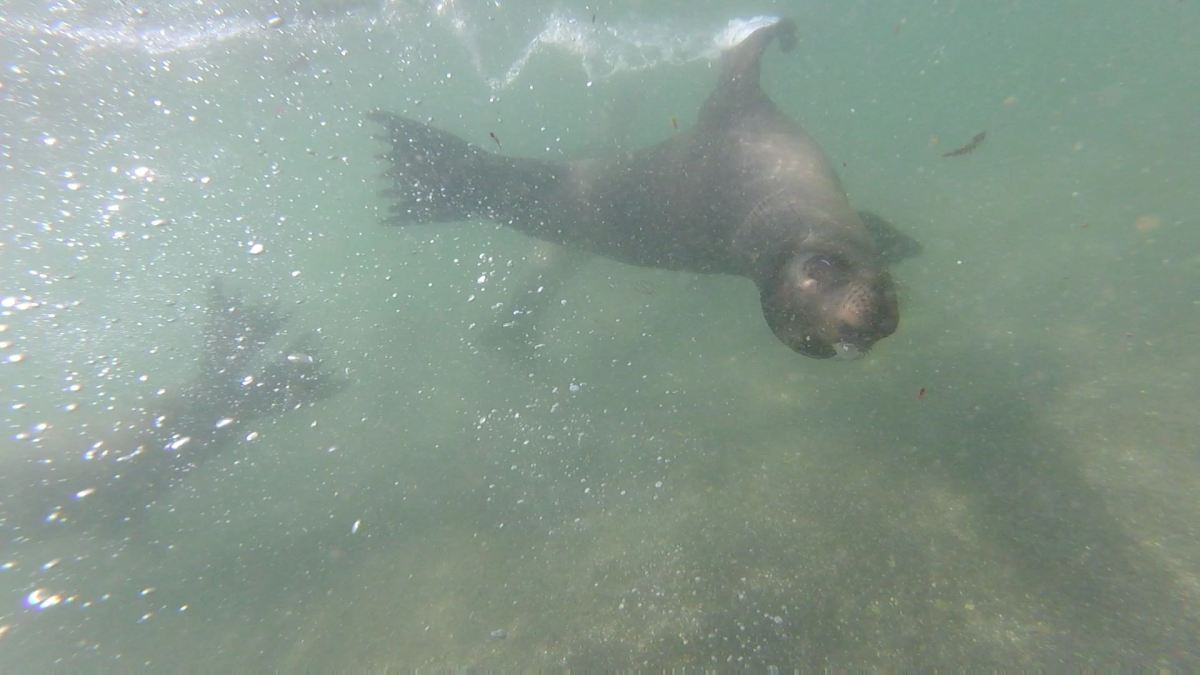 Galapagos Day 4: Fernandina Island