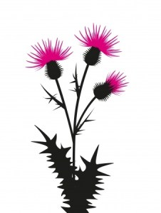 thistle silhouette 20625395_s