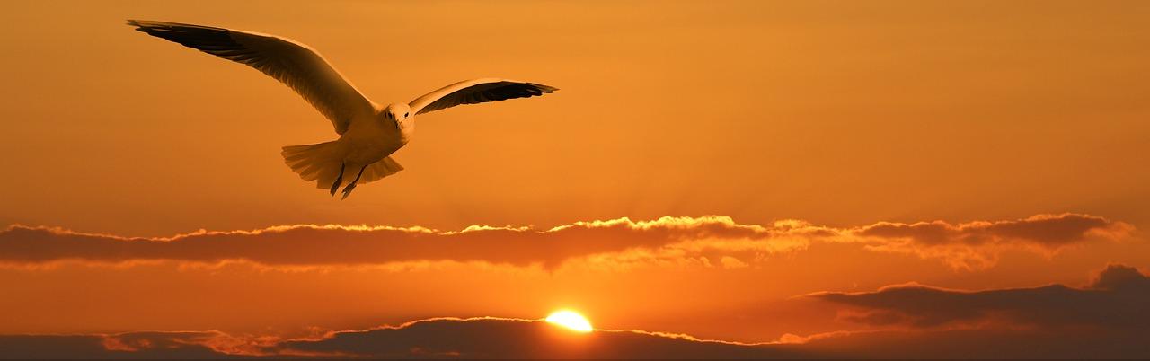 bird flying during sunset