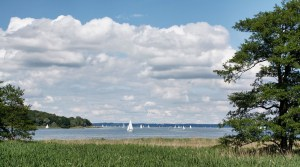 trees surrounding a lake
