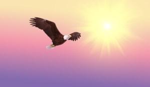 eagle flying into sun