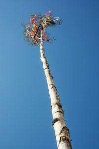 arbre de mai