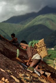 Nepal Autor: Steve McCurry