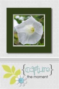 Flower card 3