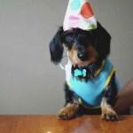 Happy dog celebrating.