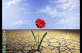 resiliencia - Resiliência