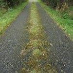 tiny-remote-road-web
