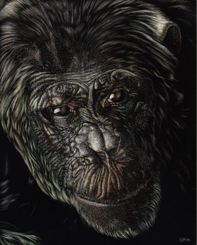 Chimp Abu (Small)