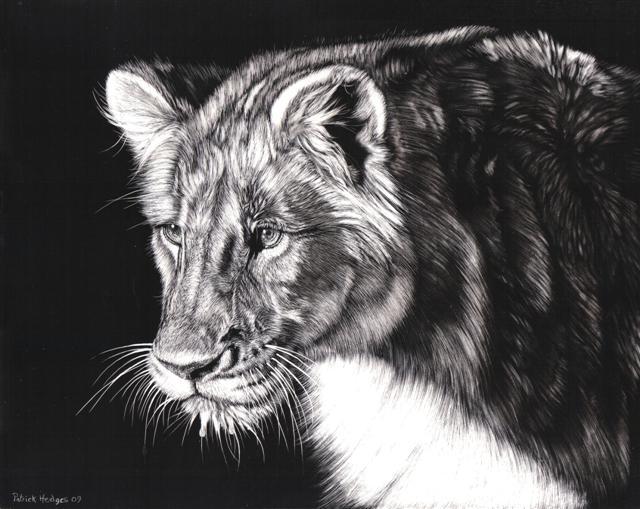 Lion Zambia (Small)