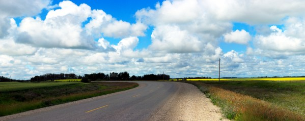 Panorama: curved highway with canola fields in the background