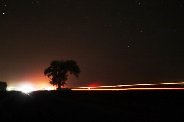 The halfway tree at night