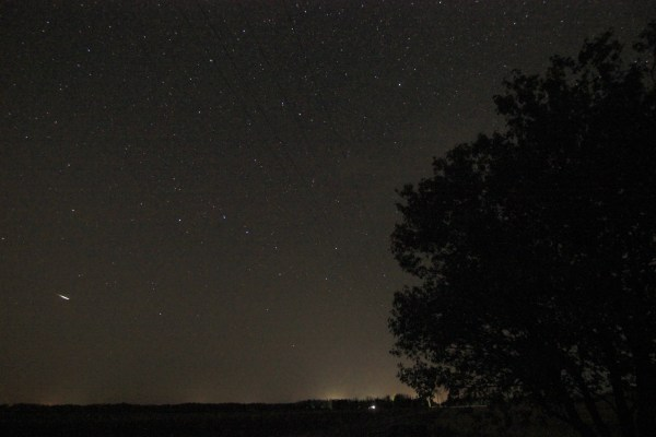 Tree, Big Dipper, and a meteor