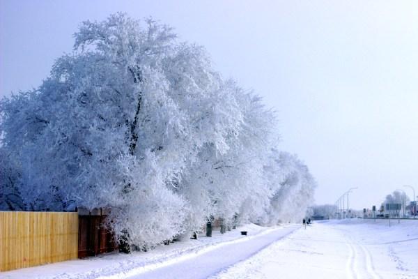 Frosty trees along the walking trail