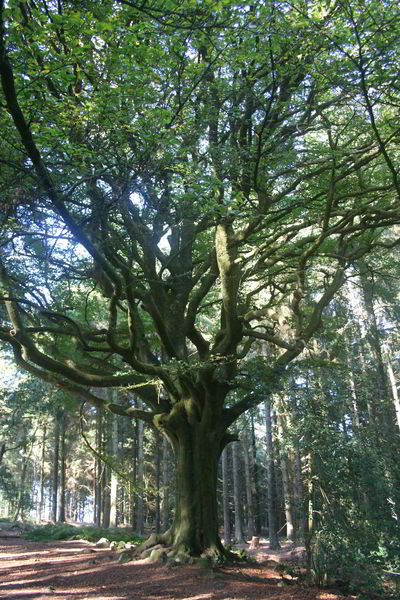 Stage photo en forêt de Brocéliande