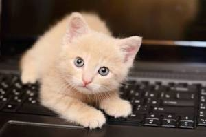 CHaton apprenti blogueur