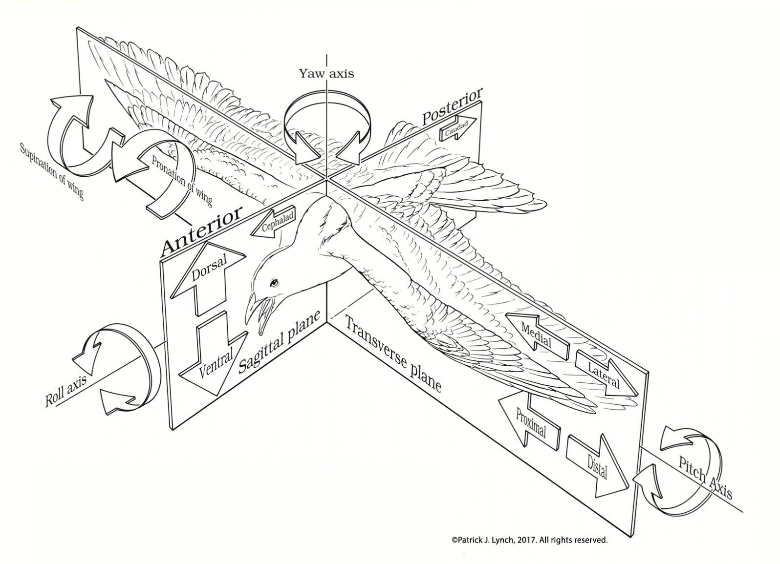 bird-orientation-planes-cropped