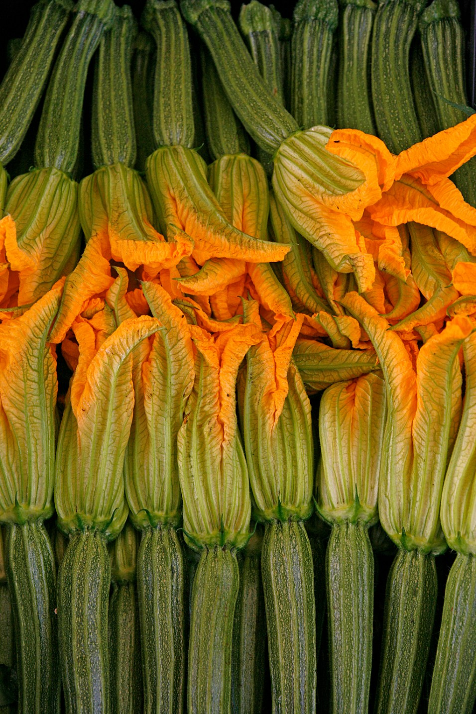 Young zucchini with flowers.