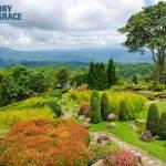 Wilderness to a Garden