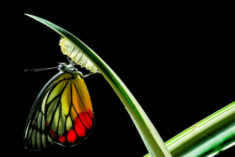 Spiritual renewal showing a butterfly in development