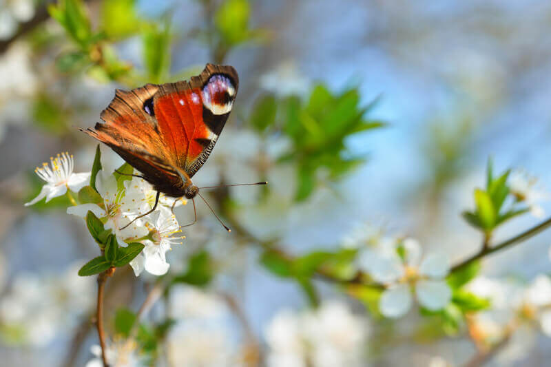 Grace is God's power showing a butterfly