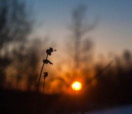 2-fevrier-coucher-soleil-brindille-1-sur-1