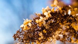 2-fevrier-fleurs-mortes-1-sur-1