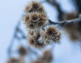 2-fevrier-fleurs-sechees-1-sur-1