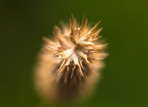 2-septembre-herbe