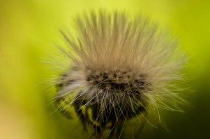 9-juillet-fleur-fanee