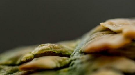 champignon (1 sur 1)