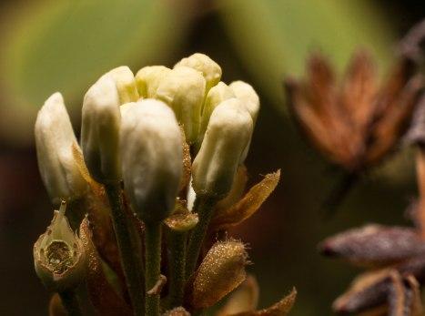 coeur-de-fleur-st-pancrace