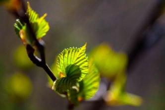 feuilles-soleil