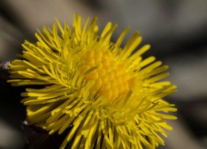 fleur jaune (1 sur 1)