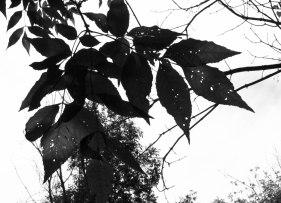 silhouettes-feuilles-n-et-b