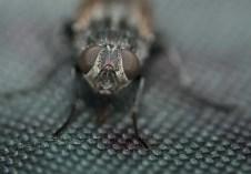 mouche sur mon sac (1 sur 1)