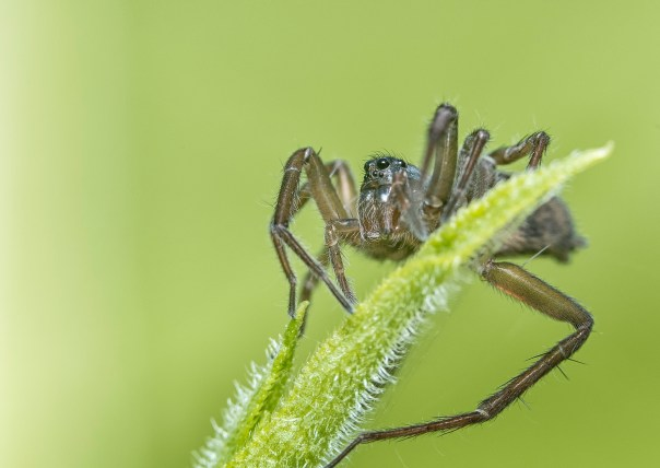 araignée équilibre (1 sur 1)