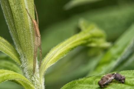 araignée surveille (1 sur 1)