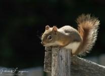 écureuil profite du soleil (1 sur 1)