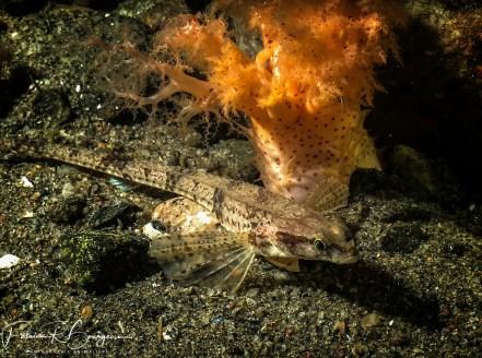 poisson-alligator (1 sur 1)