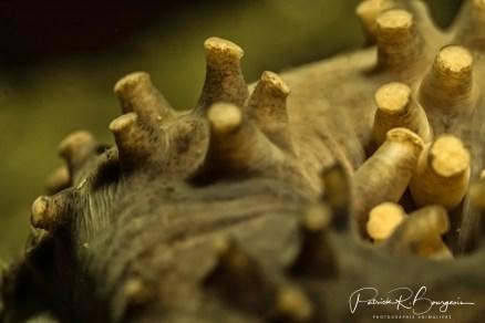 concombre ventouses (1 sur 1)